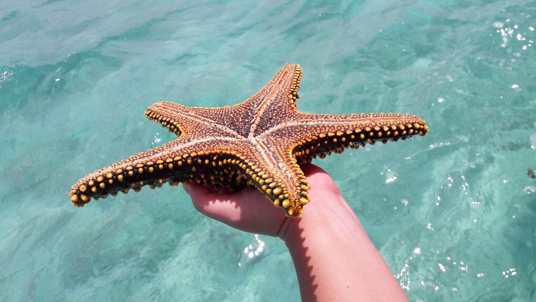 Op Zanzibar moet je zeker gaan snorkelen. Dat is één van de beste bezienswaardigheden