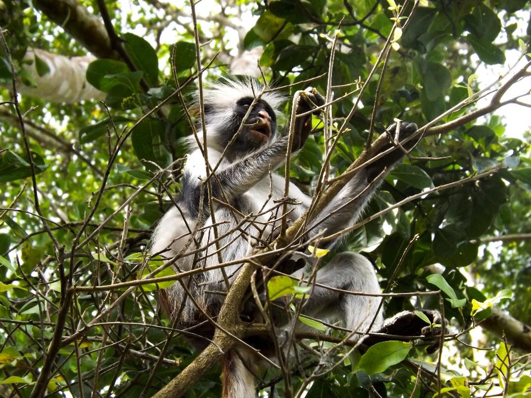 Een aap in de boom