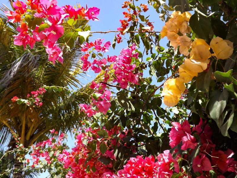 In de tuin van Sahari Zanzibar vind je prachtige bloemen
