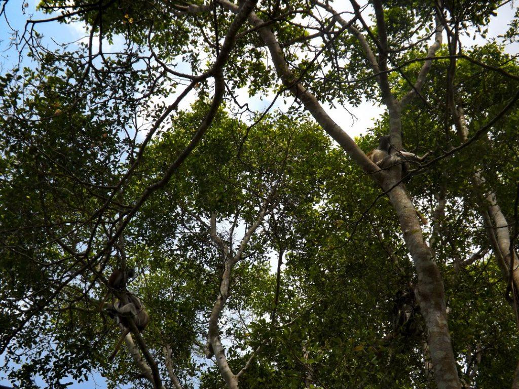 Bomen in Jozani Forest