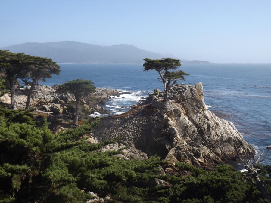 De Lone Cypress langs de 17-mile drive